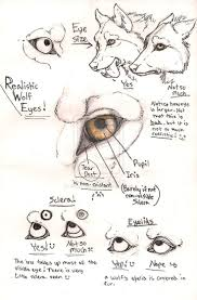drawing eyes anatomy and perspective anatomy body system