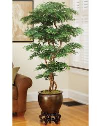shop most popular silk and artificial trees at officescapesdirect