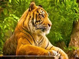 134 best animals iii images on pinterest animals desktop