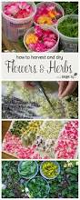 best 20 drying flowers ideas on pinterest dried flowers