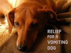 boxer dog upset stomach dog upset stomach causes treatment u0026 more ultimate home life