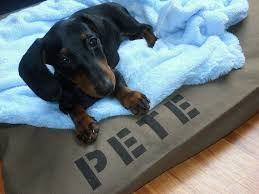 Cute Puppy Beds The 25 Best Dog Bed Covers Ideas On Pinterest Large Bed Covers