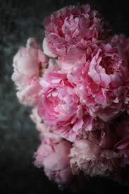 Peony Flowers 657 Best Peonies Images On Pinterest Pink Peonies Flowers And