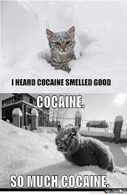Cat Cocaine Meme - rmx i heard cocaine smelled good by zul83 meme center
