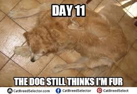 Clean Cat Memes - image result for cat memes clean cats pinterest cat memes