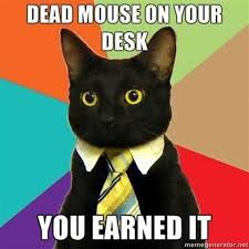X All The Things Meme Generator - business cat meme list of funny business cats