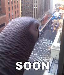 Soon Horse Meme - image 117028 soon know your meme