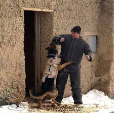 belgian malinois k9 attack modern war dogs k 9 corps military dogs navy seal paratroopers