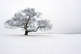 the magic of the winter tree the washington post