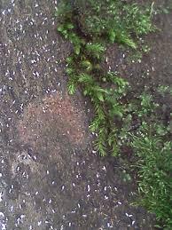 biodiversity in my backyard habitats in a dying tree