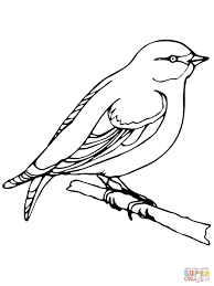 wren coloring page free printable coloring pages