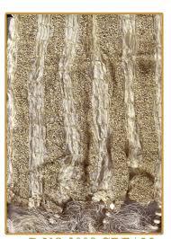 Mens Shower Curtains by Mens Cream Gold Crush Silk Dupatta