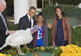 obama pardons turkey cheese in annual thanksgiving ritual today