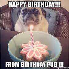 Birthday Pug Meme - birthday pug meme generator