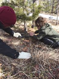 Where To Go To Cut Your Own Christmas Tree In Colorado Red