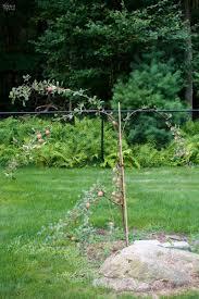 100 backyard peach tree april 2013 bay branch farm a