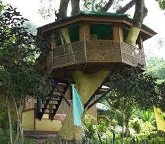 amazing tree house design quecasita