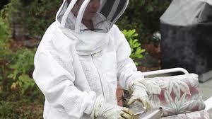 local news castro valley backyard beekeeper judy casale youtube