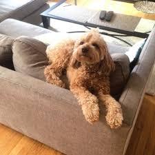 rates services nyc dog walking u2014 fur coat u0026 pants nyc dog