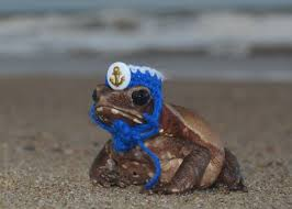 Bearded Dragon Halloween Costume Tiny Sailor Hat Frogs Toads Guinea Pigs Bearded Dragons