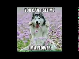 Dog Funny Meme - funny dog memes d youtube