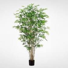 6 potted tree cluster howell s floral