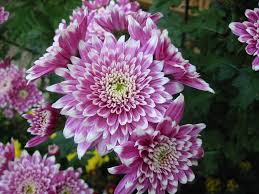 10 of the best edible flowers to grow in your yard oregonlive com
