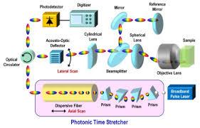 osa high throughput optical coherence tomography at 800 nm