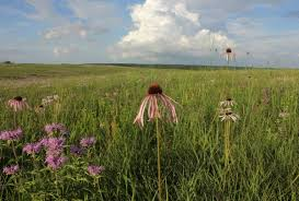 prairie oak ecosystems of the missouri prairie foundation gets creative to save endangered