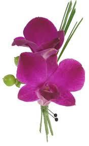 purple orchid flower purple orchid boutonniere cbbcit01 flower patch
