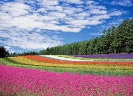 prayer for july 21st flowers hokkaido and windsor vt