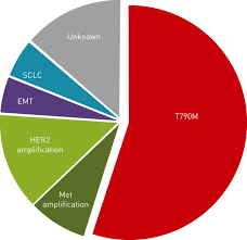 molecular mechanisms of resistance in epidermal growth factor