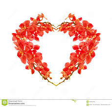 Red Orchids Red Orchid Heart Stock Photography Image 20784132