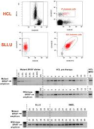 simple genetic diagnosis of hairy cell leukemia by sensitive