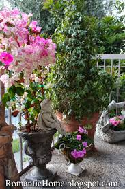 Bougainvillea Topiary - my romantic home bougainvillea show and tell friday