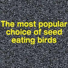 pennington select black oil sunflower seed wild bird feed 20 lbs