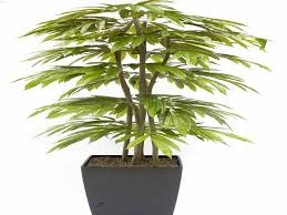 good low light plants willpower tall house plants indoor low light luxury awesome