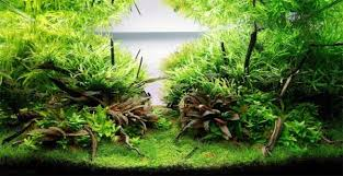 Aquarium Decor Ideas Aquariums With Amazing Underwater Decorations 123 Photos