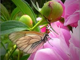 flower butterfly butterflies flowers beautiful bugs wallpapers hd