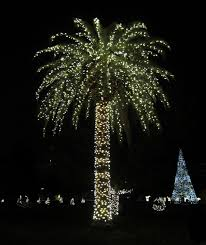 palm tree lights palmtree