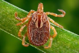 preventing lyme and a new disease as ticks spread wamu