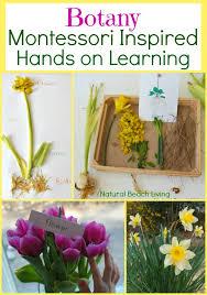 montessori tree printable best montessori botany activities for kids hands on flower