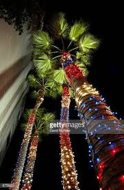 Decorate Palm Trees With Christmas Lights by Christmas Lights On Palm Trees Stock Photos And Pictures Getty