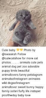 25 best memes about adorable puppy adorable puppy memes