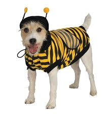 Halloween Costume Animal by Last Minute Halloween Costumes