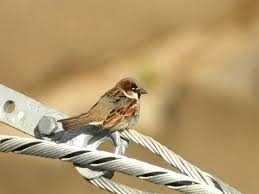 birds of extremadura spain the commonest birds in extremadura