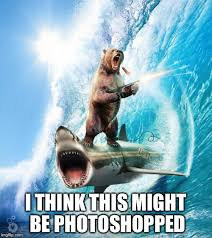 Shark Meme - bear riding shark meme generator imgflip