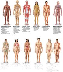 Directional Terms Human Anatomy Major System Of The Human Body Diagram 78 Best Images About Human