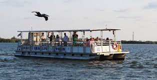 nature sealife cruise tarpon bay explorers nature tours