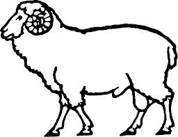 shaltz farm sheep faq